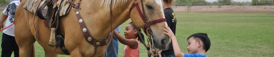 Kids Klub pets horses